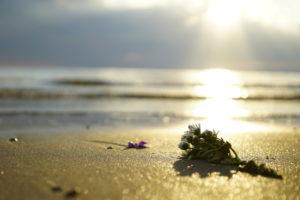 ペットの海洋葬