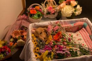 ペット自宅での土葬
