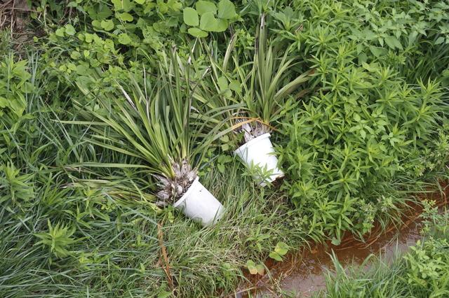 鉢植え プラント ごみ