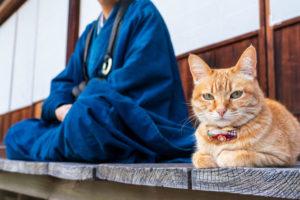 永大供養をしてくれているお寺の猫