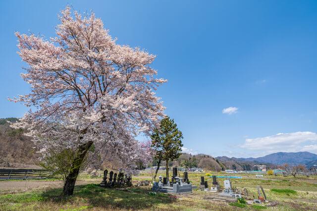 樹木葬のメリットとデメリット