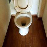 名古屋市港区のゴミ屋敷片付けアフタートイレ