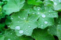 梅雨 虫 ブログ01