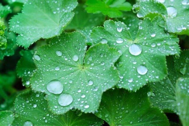 梅雨に出る虫の対策とは