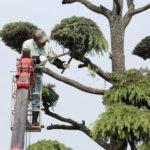 木 伐採 ブログ01