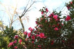 庭 木 抜根 ブログ01