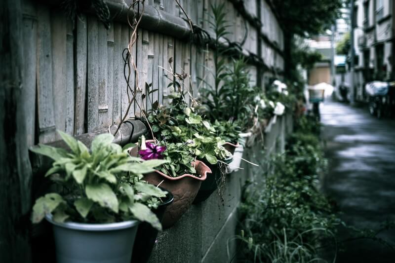 鉢植えの捨て方