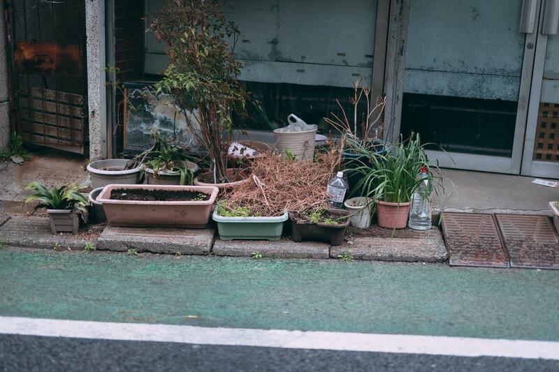 鉢植えはどう捨てる