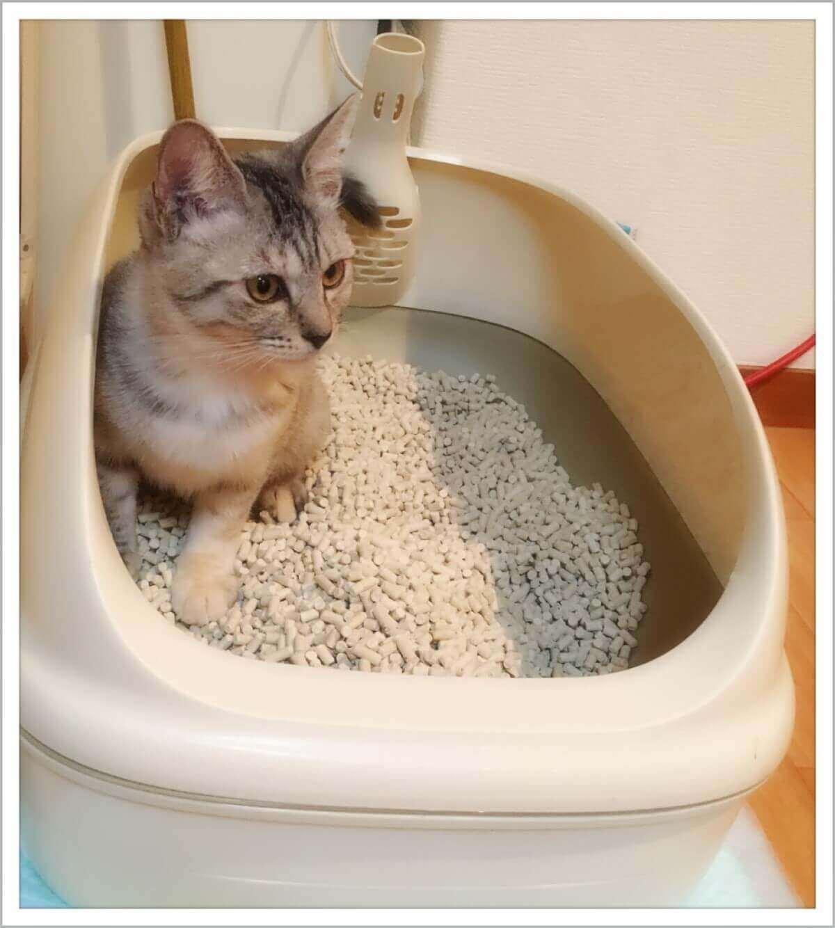 猫のトイレの捨て方は?本体や猫砂などトイレ用品ごとに解説